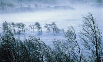 vant iarna
