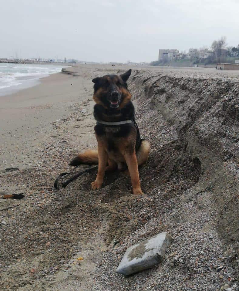 caine droguri plaja