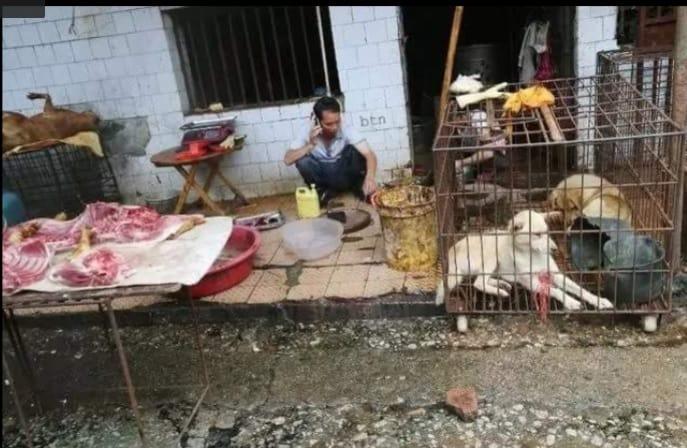 piata china