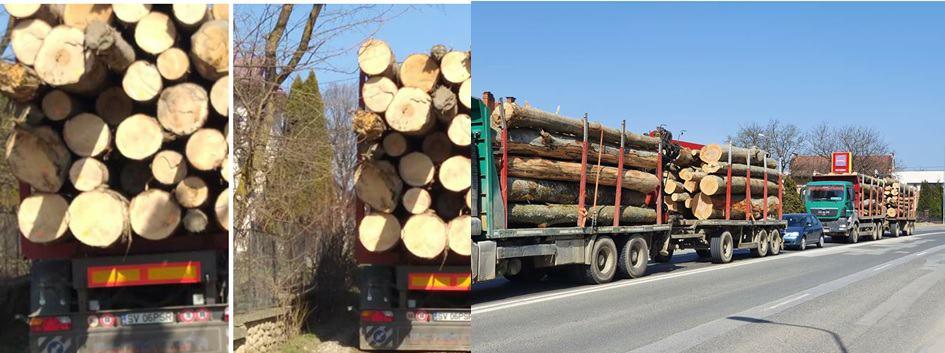 lemn taieri ilegale