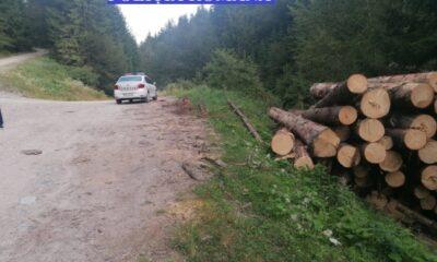lemn, ilegal