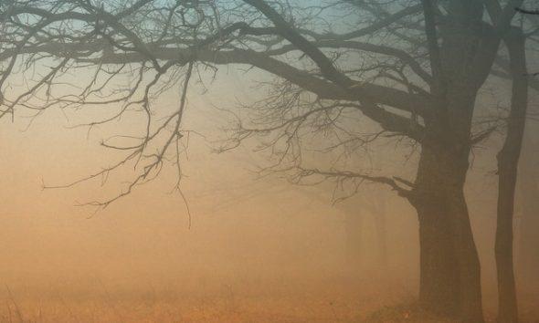 vederea dimineața este ceață
